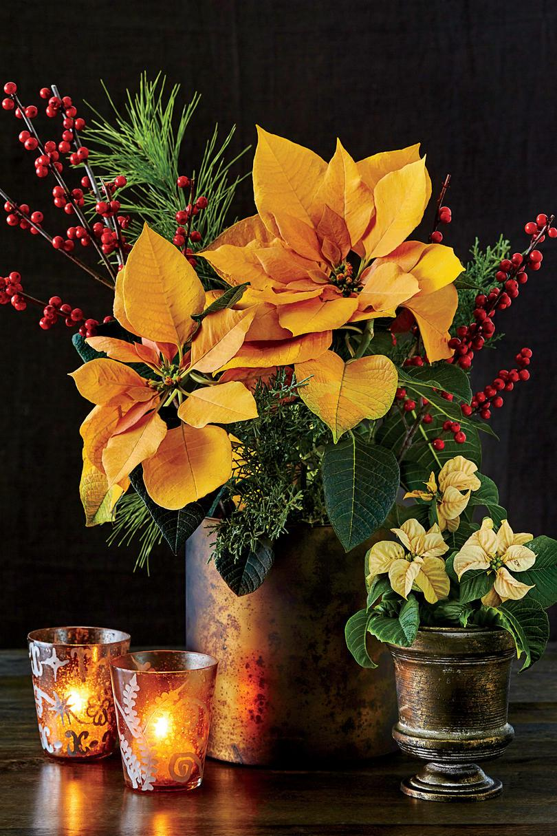 Guld Poinsettia Flower Arrangement
