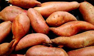 Cómo cultivar papas dulces en un recipiente