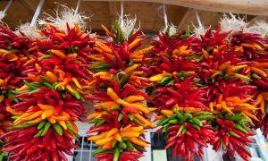 Hotter (a zdravější) než Pepper Sprout