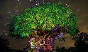 Můžeš hádat, kolik zvířat jsou vyřezáni na Strom života v Disney World?