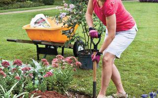 كيفية زراعة الكريب ميرتل بالنجاح