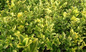 あなたの正面のための5つの恐ろしい植物
