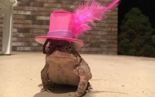 Alabama člověk dělá neuvěřitelné klobouky pro jeho malou ropucha