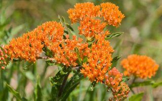 النباتات المعمرة منخفضة الصيانة لحديقتك الجنوبية