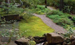 Засадете мозаечна трева
