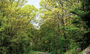 Skyline Drive er den skal-tage vejrejse i foråret