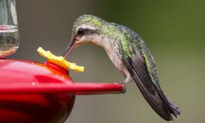 Hemmeligheden til en have Fyldt med kolibrier skjuler sig i din Pantry