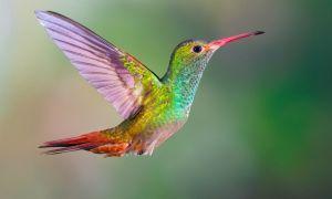 Tato položka $ 6 od Chip a Joanna Gaines může udělat svůj dvor kolibříkovou oázu