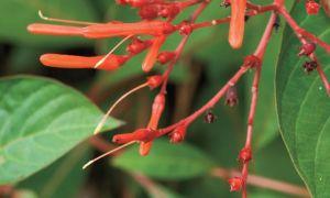 10 защитени от суша местни растения