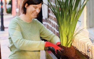 ウィンドウボックスを植える方法