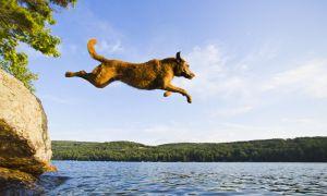 あなたが犬を持っているなら,この夏のDoggydockが必要です