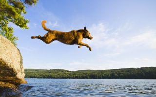 あなたが犬を持っているなら、この夏のDoggydockが必要です