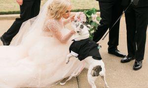 Dělat a nedělat, aby váš pes ve vaší svatbě