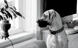 犬と小さな空间で生活するためのヒント