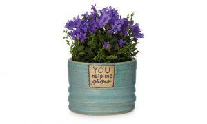 16 أواني مثالية للنباتات الداخلية أقل من 50 دولارًا