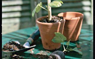 بداية البذور