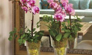 Лесни за растеж растения за дома