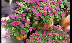 Qué plantar en tu jardín de Florida en febrero