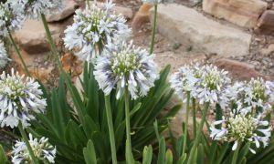3 nové rostliny, které musíte mít