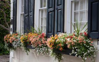 Základy okenního pole