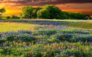 نحن نحب كيف البرية يرسمون المناظر الطبيعية في تكساس