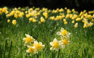 Je příliš pozdě na to, aby rostly jarní květiny?