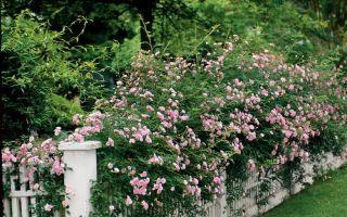 Sydens bedste duftende planter til din have