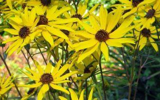 La flor más vistosa del otoño