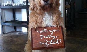 15 Rozkošný způsob, jak zahrnout vašeho psa do svatby